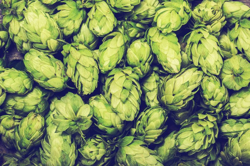 Brew Cover provide insurance for Craft Brewery Insurance in the UK